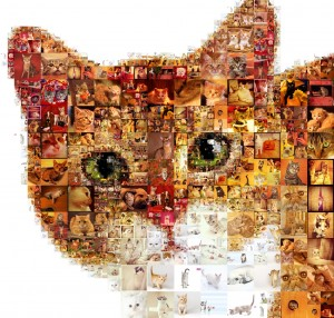 CatCollage